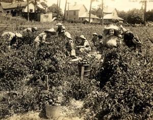 Farmerettes on the Campus Farm, 1918